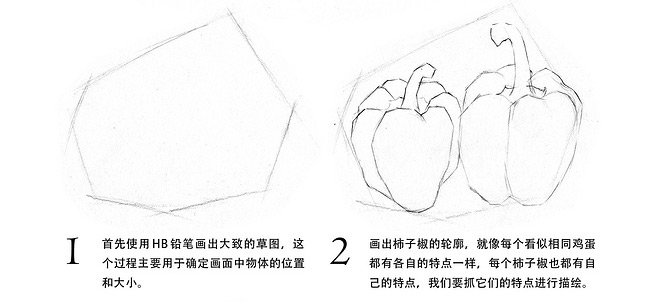 素描入门_青椒的画法教程(2)