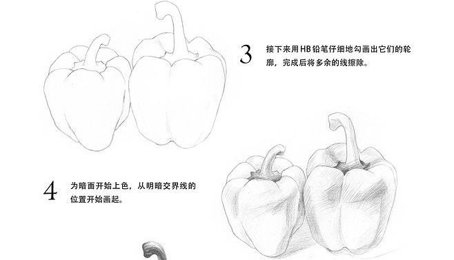 素描入门_青椒的画法教程(3)