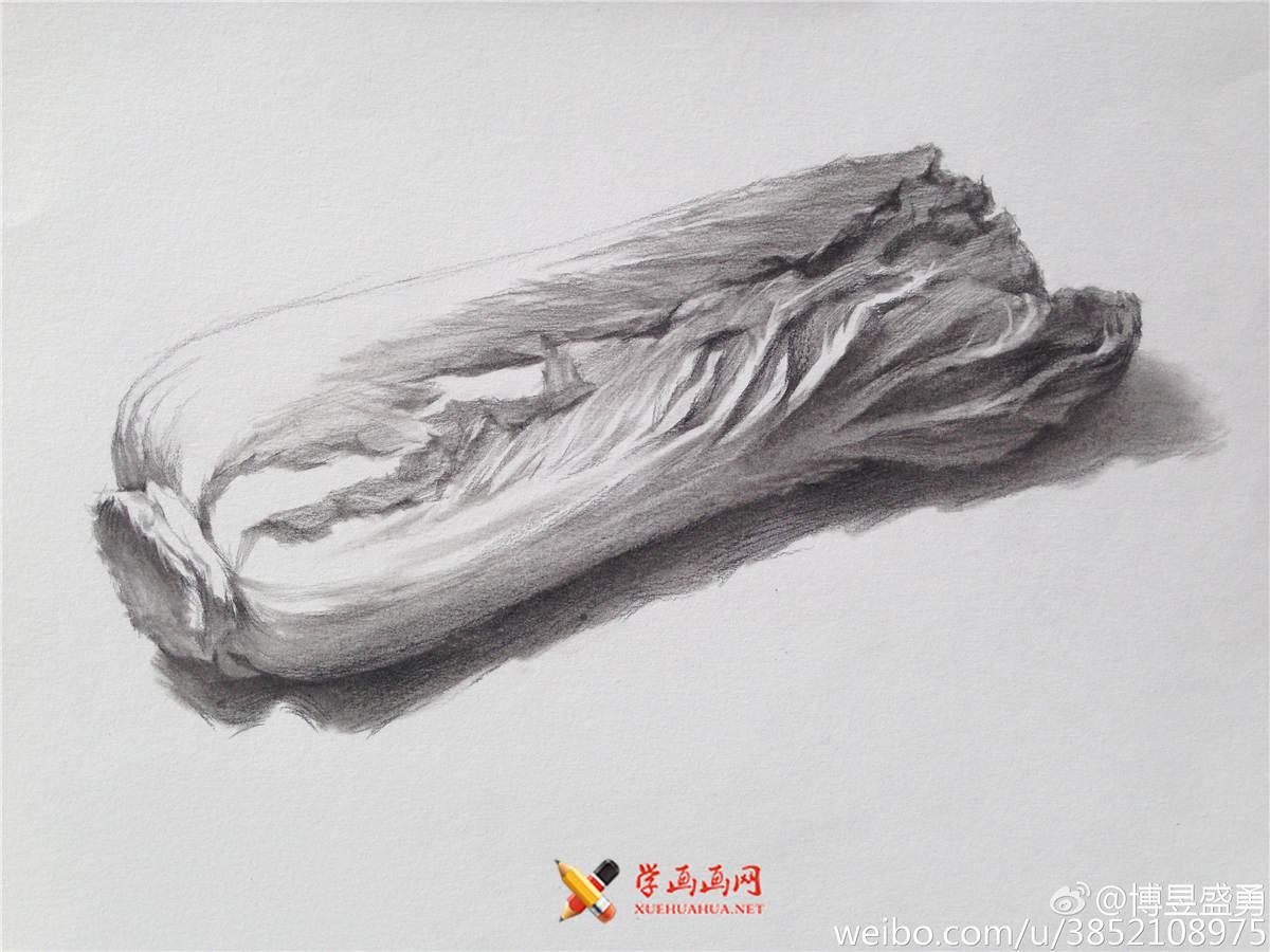 素描入门:单个物体白菜的素描画法教程(5)