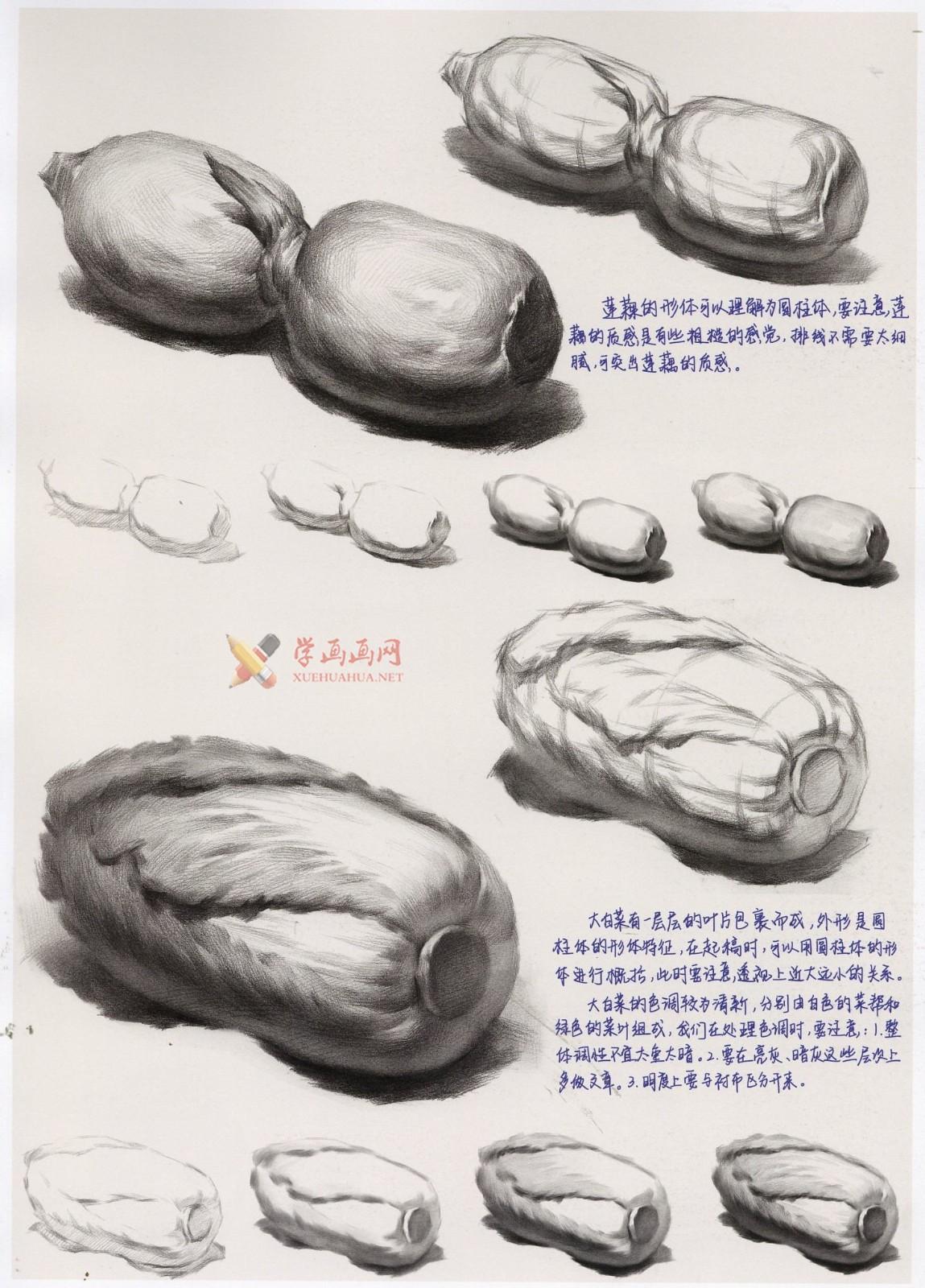 白菜怎么画?素描大白菜的画法图解及临摹范画图片素材(1)