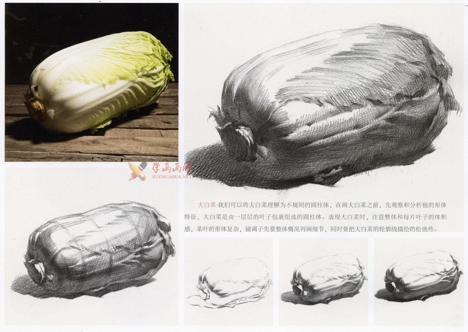 白菜怎么画?素描大白菜的画法图解及临摹范画图片素材(2)