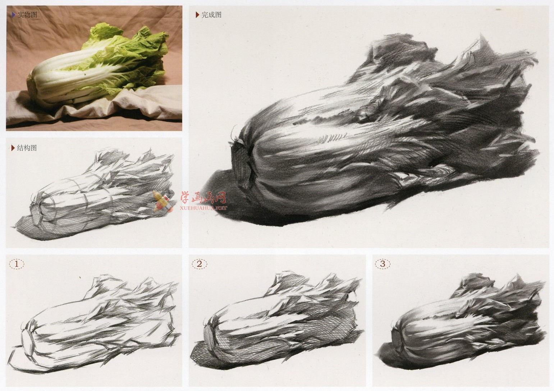白菜怎么画?素描大白菜的画法图解及临摹范画图片素材(3)