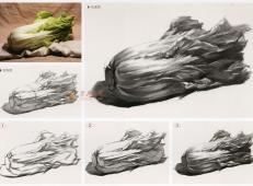 白菜怎么画?素描大白菜的画法图解及临摹范画图片素材