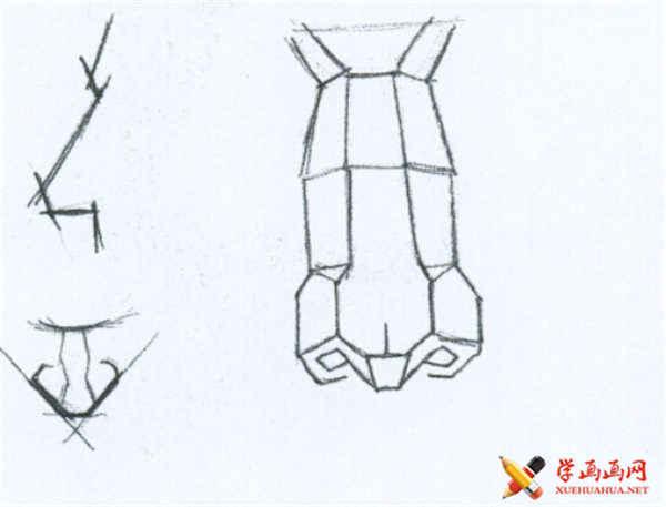 素描鼻子的结构及画法