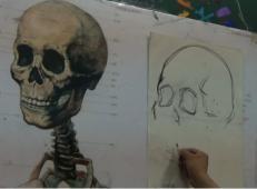 素描头像视频教程:头部骨骼的结构讲解