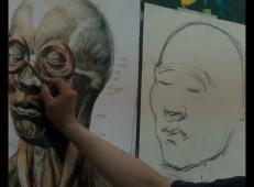 人物头部肌肉的画法视频教程