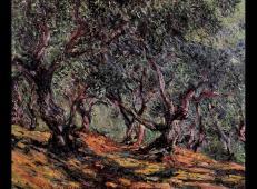 博尔迪盖拉橄榄树 莫奈.jpg