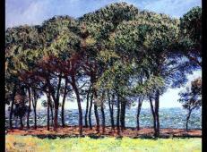 岸边的松树 莫奈.jpg